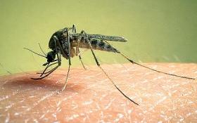 Борьба с комарами на дачном участке своими руками