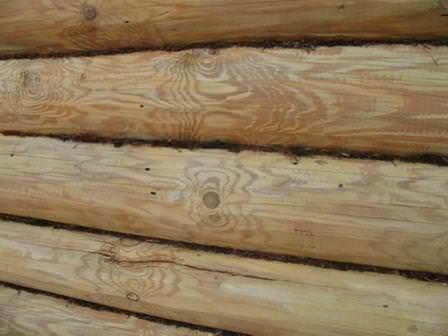 Некоторые насекомые могут попасть и в дом, где приняться за уничтожение деревянного пола, мебели, окон и дверей