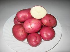 Сорт картофеля Красавчик: характеристика и отзывы
