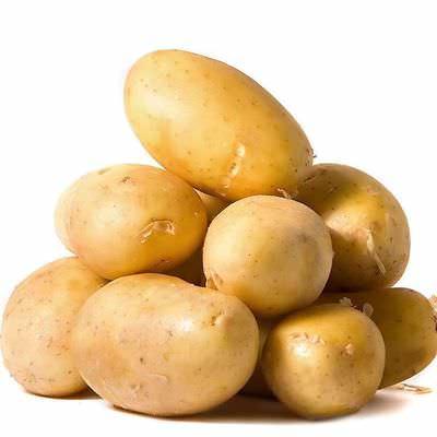 Сорт картофеля Крепыш (отзывы)