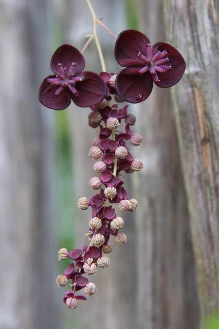 Лианы в саду (10 фото)
