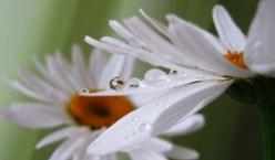 Белые цветы для клумбы: фото и названия