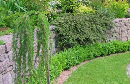 Хвойники — это тот вид растений, без которых не обходиться не один ландшафтный дизайнер