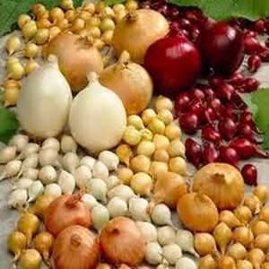 Посев и выращивания лука