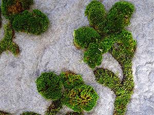 Разведение мха на садовом участке