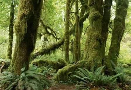 Хорошо собрать готовые растения в лесу