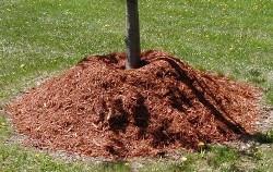 Как производить мульчирование почвы