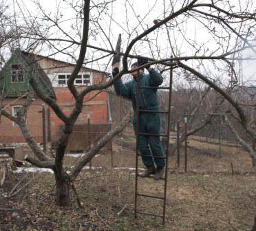 обрезки плодовых деревьев,