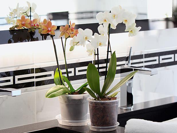 Продажа растений осуществляется в прозрачных горшках, выполненных из пластмассы