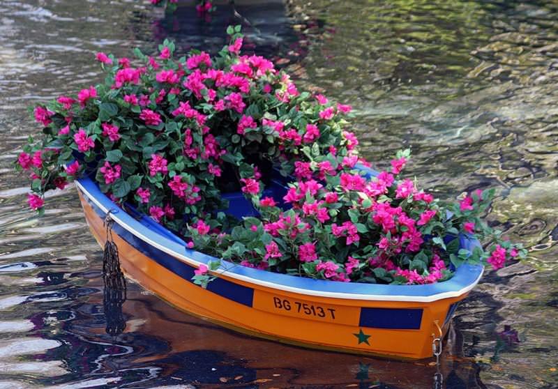 Оригинальная идея для дачного участка — лодка, полная цветов
