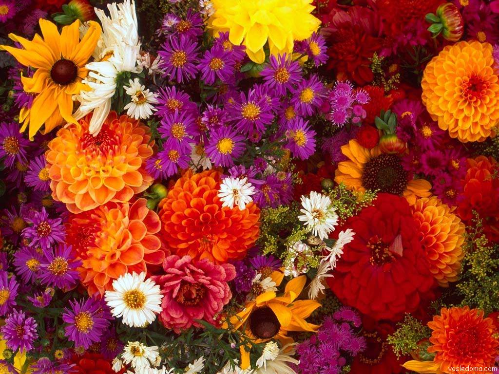 Осенние цветы (25 фото)