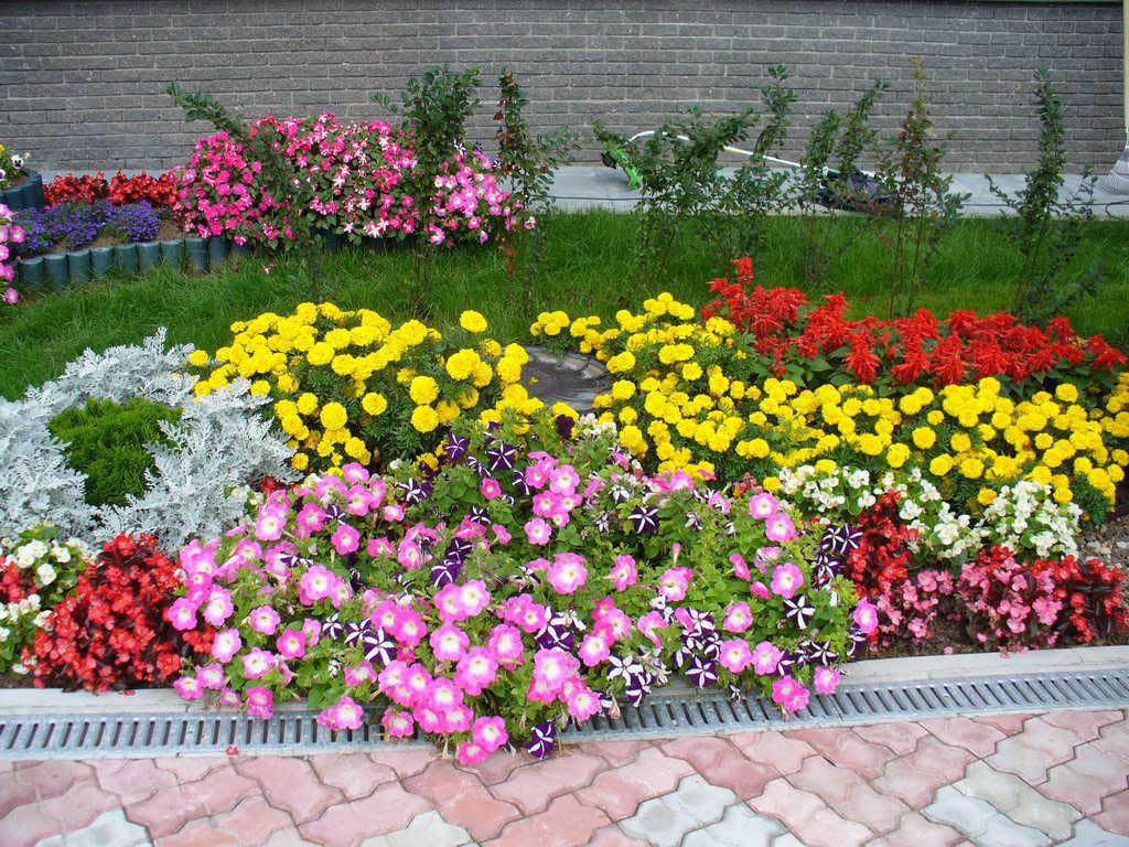 какие цветы сажают осенью фото:
