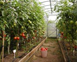 Особенности и принцип круглогодичного выращивания овощей в теплице