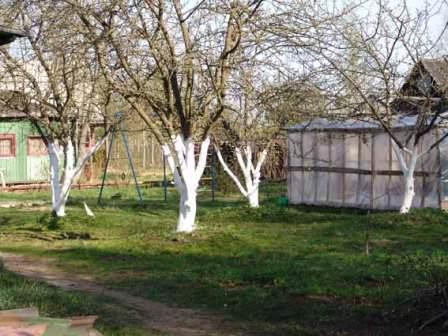 Насколько важна побелка деревьев осенью? Для чего она необходима?