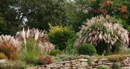 Прерийный сад: секреты создания