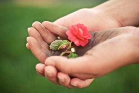 Размножение цветов