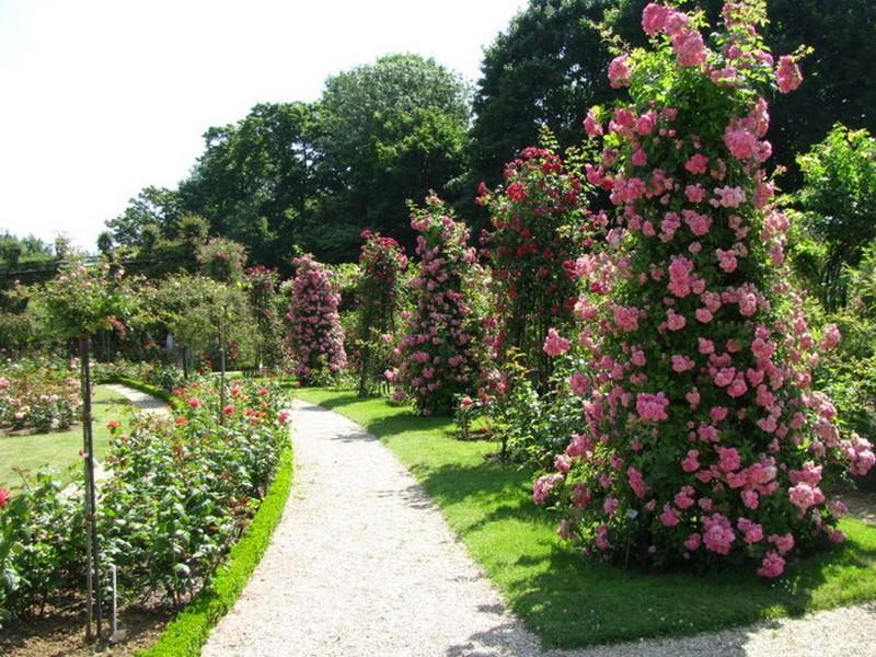 Посадка взрослых роз, молодых черенков, ответвлений куста, выращивание роз из семян - все это должно происходить на строго профессиональном уровне