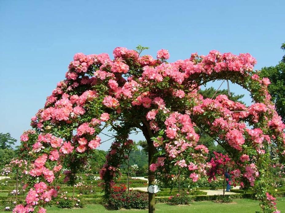 Вам следует выбрать самое подходящее место на даче, которое будет по максимуму соответствовать определенному вами виду и сорту роз