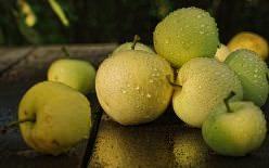 Кисло-сладкие сорта яблок