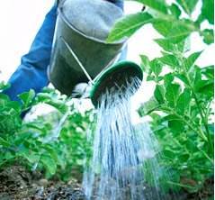 Можно ли поливать картошку холодной водой