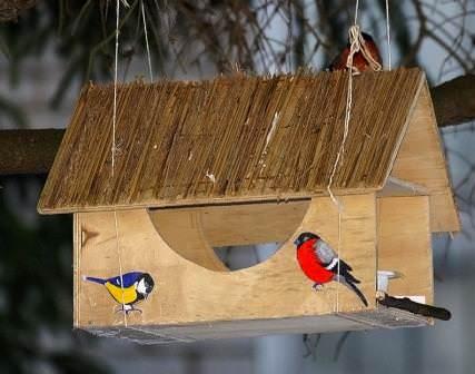 Заботимся о птицах