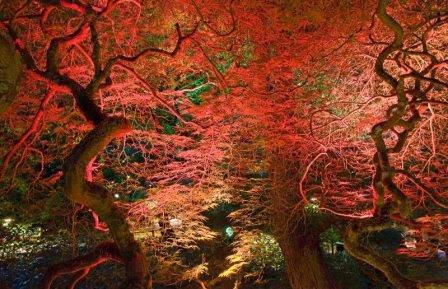 Сад в ночное время