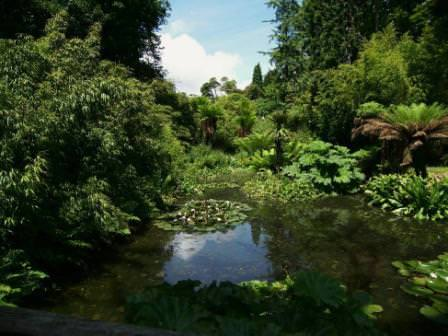 Что пережили сады