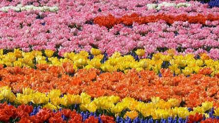 Атмосфера садов