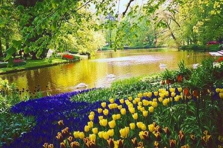 Интересные места садов Кекенхоф