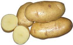 Сорт картофеля Сантэ: характеристика и отзывы