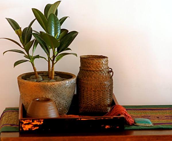 Основные причины остановки роста фикуса могут таиться в смене условий содержания