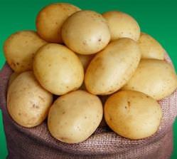 Картофель Ривьера: описание сорта и фото