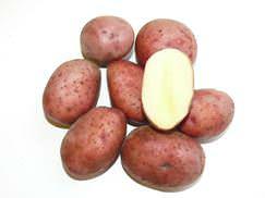 Картофель Любава (характеристика)