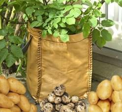 Как посадить картофель в мешках (видео)