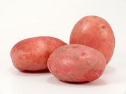 Сорт картофеля Маргарита