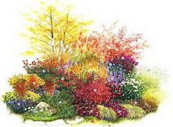 цветы осенью - красота вашего сада