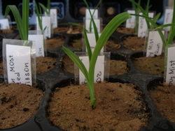 Емкости для выращивания рассады