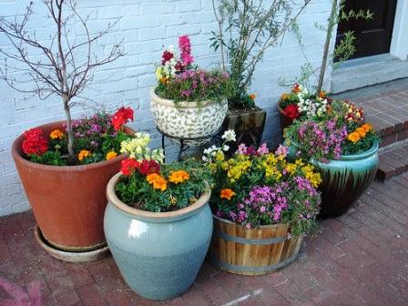 Растения в горшках в саду и на даче