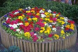 Садовые цветы как выращивать и