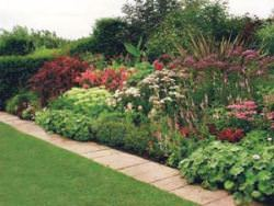 Миксбордерами называются клумбы, цветущие целый год.  Англичане первые додумались высаживать на клумбах растения...
