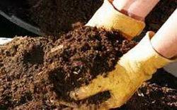 Органическая подкормка для растений