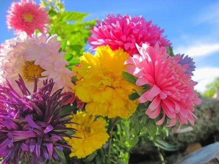 осенние цветы на вашем участке