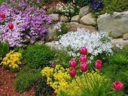 Разнообразные растения для альпийской горки
