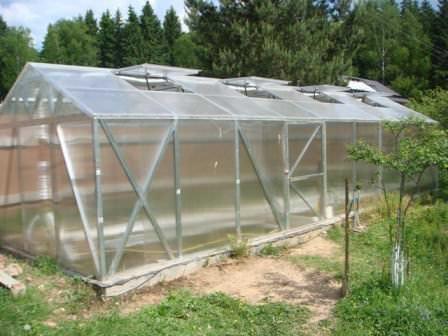 Температура в теплице - важный фактор стабильности и качества урожая