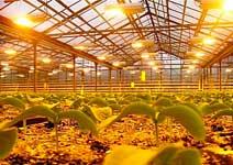 Большинству растений требуется 12-16 часов освещенности в сутки
