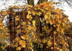 Строим арку для винограда своими руками!