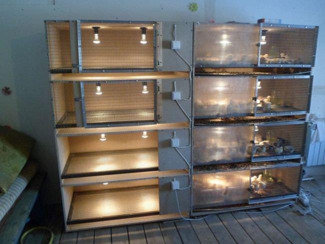 В условиях современного птицеводства брудеры являются специальными устройствами, позволяющими поддерживать оптимальные температурные показатели воздуха при выращивании молодняка домашней птицы в первые дни