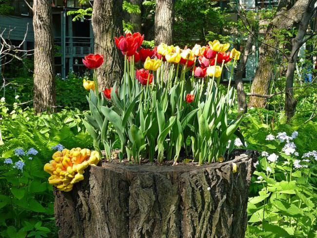 Декорирование пней живыми растениями - отличный способ гармонично оформить сад на даче