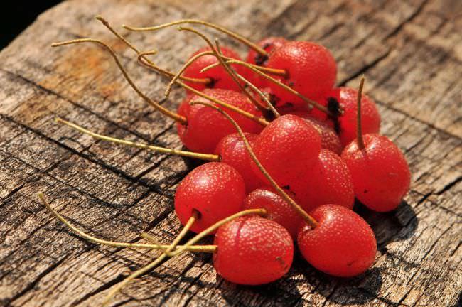Собирать ягоды – одно удовольствие