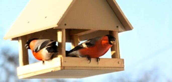 Создаем кормушку для птиц самостоятельно, поэтапно